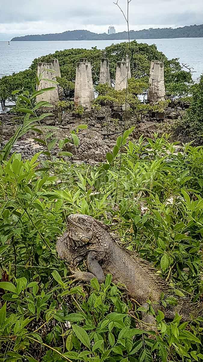 20170507_iguana-at-casco-antiguo