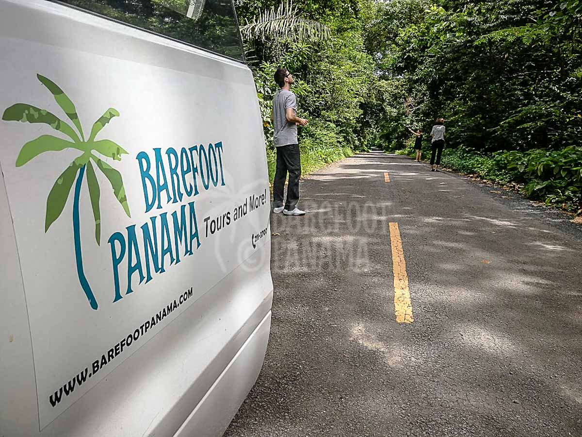 barefoot-panama-vehicle-near-colon
