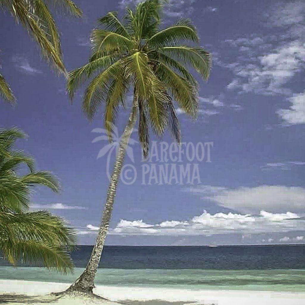 beach-at-san-blas
