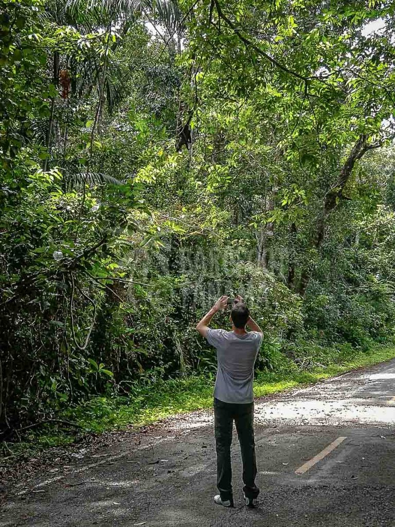 caribbean-lush-undergrowth