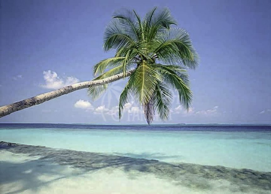 palm-tree-at-san-blas