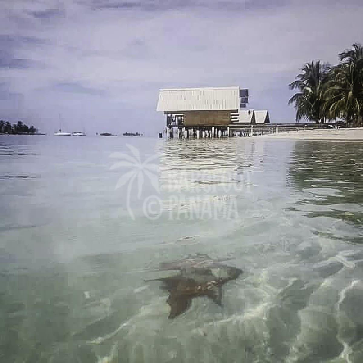san-blas-accommodation-and-starfish