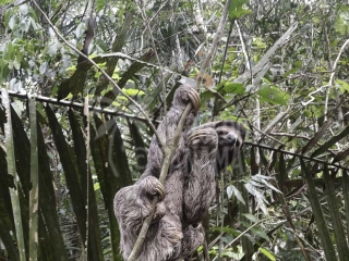 sloth-in-the-jungle
