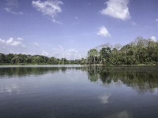 tranquil-jungle-on-panama-canal