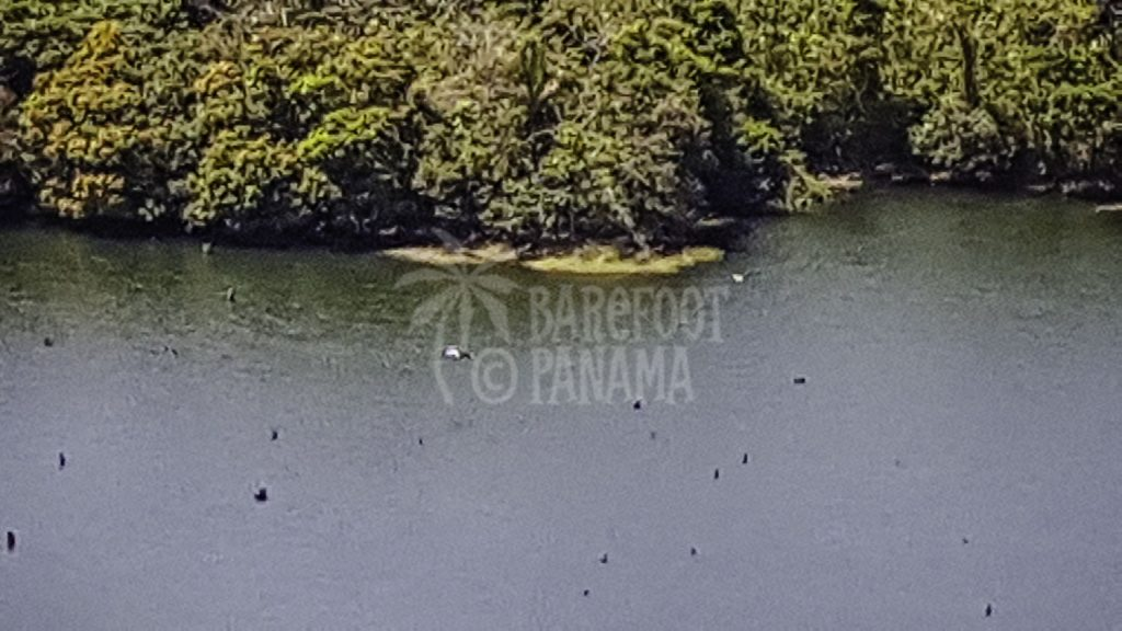 tree-stumps-in-lake-gatun