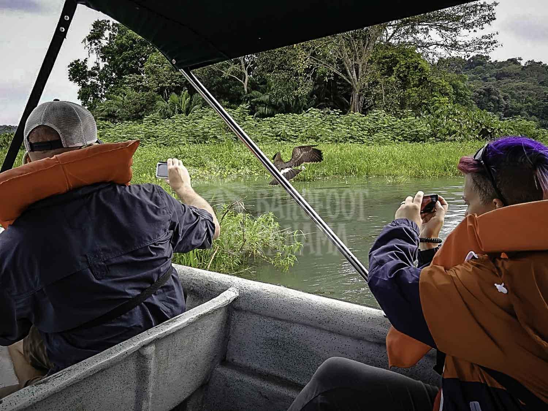 wild-birds-on-panama-rainforest-boat-tour