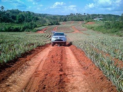 pinapple plantation tour in panama